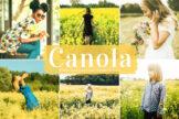 Last preview image of Canola Mobile & Desktop Lightroom Presets